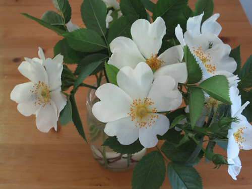Wild roses ....some of the studio surroundings' treasures