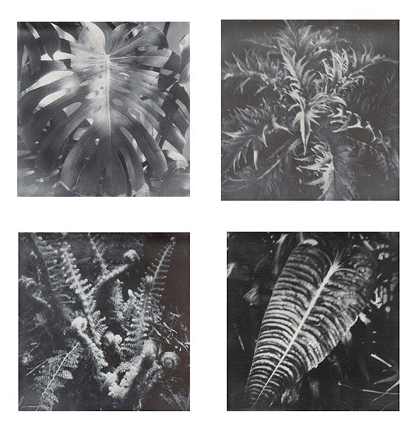 px-pflanzen-und-blumen-i-web