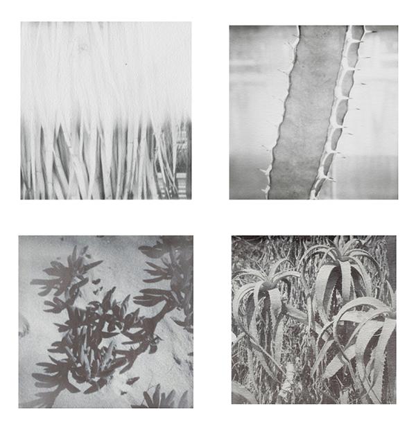 px-pflanzen-und-blumen-ii-web